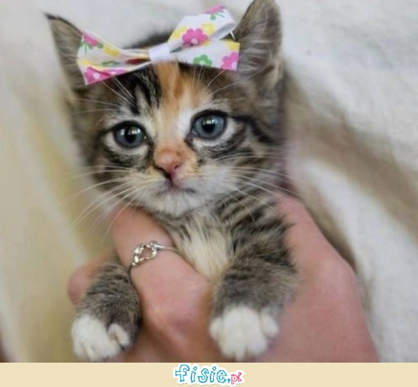 Picture Of Cute Cats With Bows
