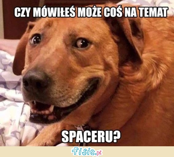 Spacer?